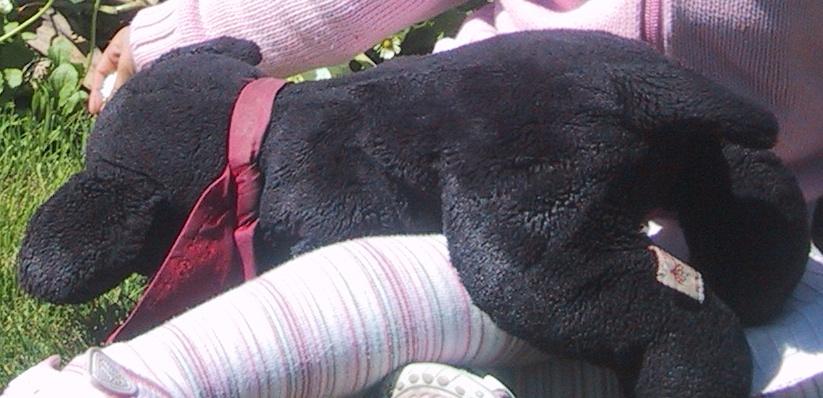 Labrador Fridolin